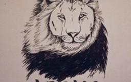 Portraits – Animals